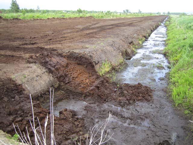 草炭採掘地