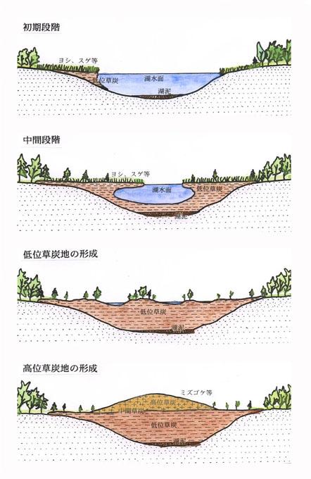 草炭地の発達様式